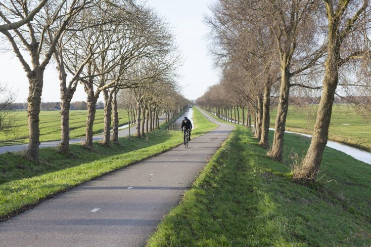 cyclist climbs dike of polder Purmer north of amsterdam in the netherlands on bicycle track between tree lines